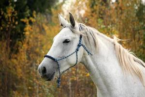 cavalo branco no retrato do pasto