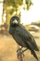 corvo segurando na barreira de tráfego de ferro.