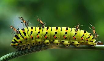 colagem sobre formigas
