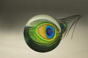 reflexão de penas de pavão em uma esfera de vidro