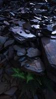 samambaia dentro de resíduos de rocha foto