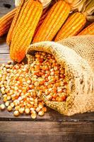 ainda vida de sementes e milho seco foto