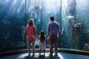 família olhando para o tanque de peixes