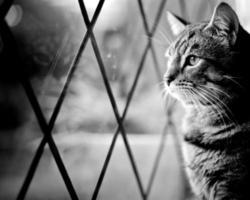 gato tigrado pela janela