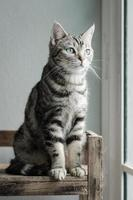 gato tigrado bonito sentado e olhando foto