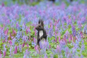 visualização de flores de ezorisu