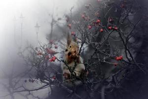 esquilo misterioso. foto