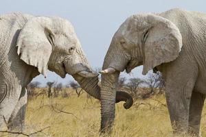 elefante com ternura