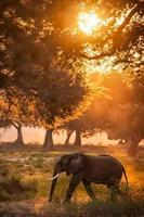 elefante na luz do sol