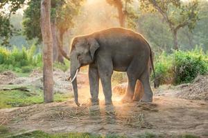 fazenda de elefantes perto do parque nacional de chitwan no nepal
