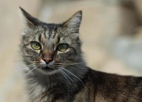 chat à poils longs foto