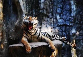 feroz tigre descobrindo os dentes foto