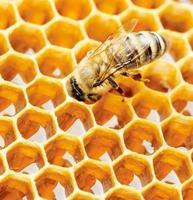 abelha trabalhando