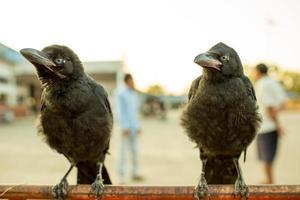 corvos segurando barreira de tráfego de ferro.