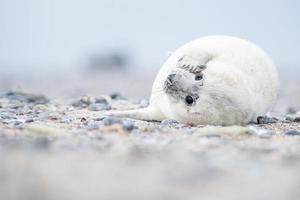 filhote de cachorro branco cinza selo foto