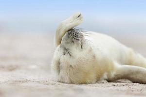 relaxando na praia foto