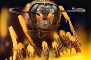 ampliação extrema - vespa em uma flor foto