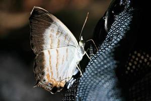 borboleta isolada no fundo preto foto