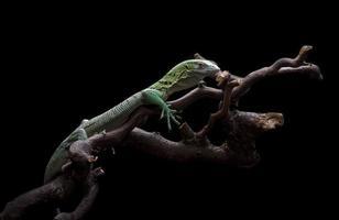 monitor de árvore verde foto