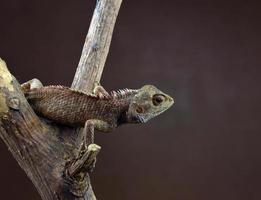 lagarto empoleirar-se na árvore foto
