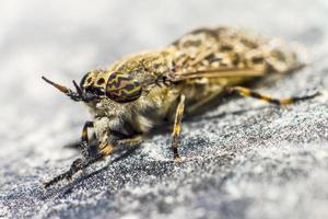 retrato de uma mosca