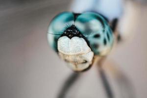 olhos de libélula de perto foto