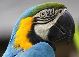 papagaio upclose foto