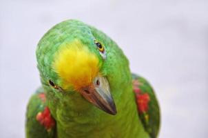 retrato de papagaio foto