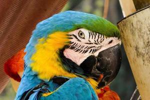 perroquet foto