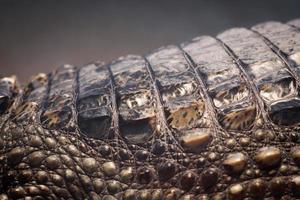 textura de pele de crocodilo. foto