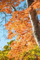 árvore foto