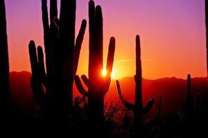 primeiro pôr do sol no parque nacional saguaro, perto de tucson, arizona.