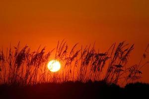 fim de dias laranja foto