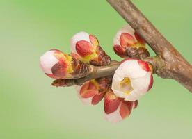 broto de primavera foto