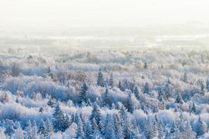 vista para a floresta de inverno foto