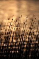 lago do sol
