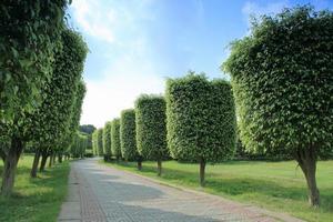 arranjo de árvores foto