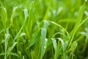 foto de grama verde fresca