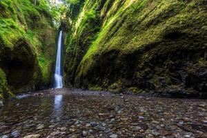bela natureza em oneonta gorge trail, oregon foto