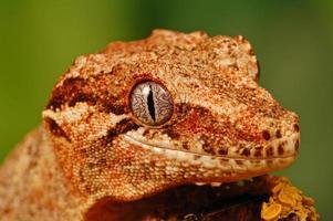 cabeça de lagartixa de gárgula foto
