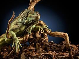dragão assustador. foto