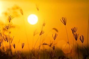 grama flores pôr do sol