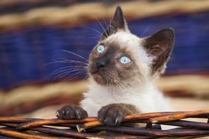 precioso gatinho em uma cesta foto