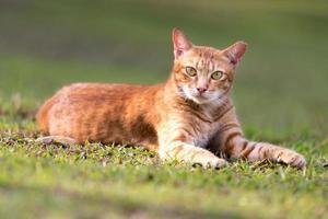 gato orangotango foto