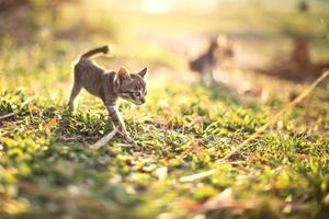 gato jovem foto