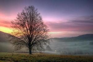 árvore de outono foto