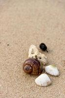 fundo da praia foto