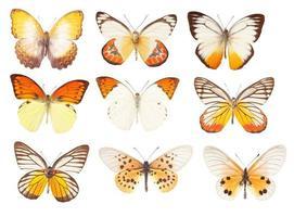 borboleta amarela em um fundo branco foto