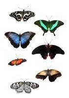 lindas borboletas tropicais foto