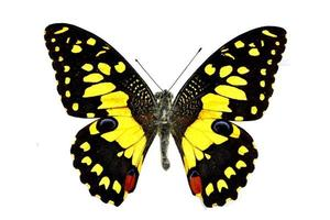 borboleta colorida isolada no branco foto